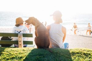 brown dog sitting next to a person in a white shirt overlooking the ocean