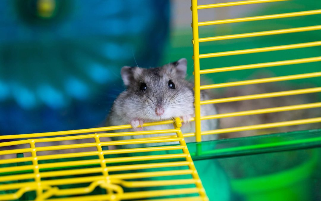 The Hamster Wheel of Life